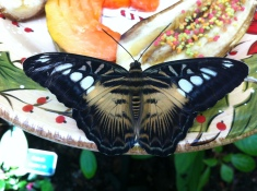 In the Butterfly Conservatory