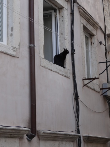 Contemplative Dubrovnik resident