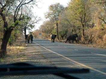 Elephanti Crosswalk, Livingstone