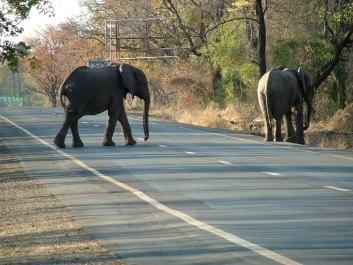 Elephant Crossing, Livingstone