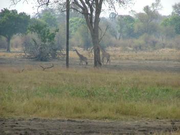 Near Mfuwe