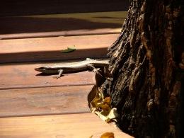 Deck lizard