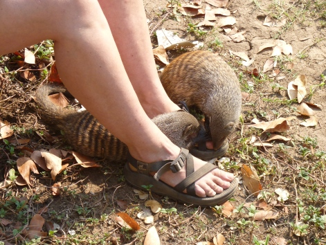 Mongoose think my feet are swell