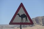 Camel Crossing, Jordan